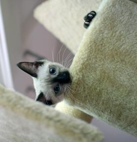In the cat tree